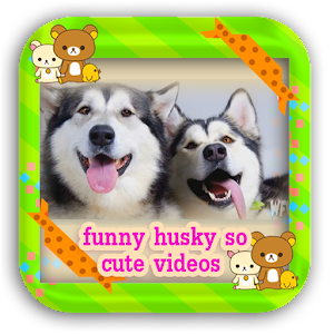 Descargar app Divertido Husky Tan Linda