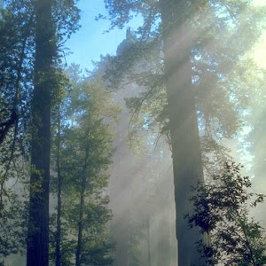 Descargar app Redwoods Live Wallpaper